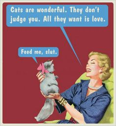 Cats..