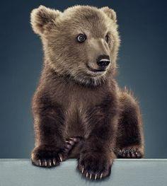 beautiful baby bear.