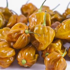 """Habanero Mustard. 150,000 - 325,000 Scoville Units. Capsicum Chinense. This hot, high yielding pepper originates from the Caribbean. The wrinkled pods are about 1.5"""" (4 cm) in length and width. The pods color from light green with a hint of purple, to a mustard-orange color and finally orange when mature."""