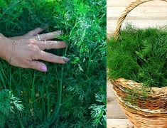 Dom a záhrada – radynadzlato.sk Herbs, Plants, Food, Eten, Herb, Planters, Meals, Plant, Spice