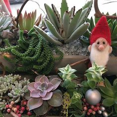 Time to order #holidayparty centerpieces? @flourishsucculents @bonaircenter is the place for you. Custom made or grab and go. #beautiful #eyecatching #greenbrae #exploremarin #holidayspirit  #holidays #shopping #marininstagram #party #bonaircenter #flourishsucculents