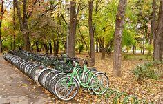 Free Image on Pixabay - Bicycles, Park, Lifestyle, Leisure