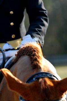 Dressage horse with braids
