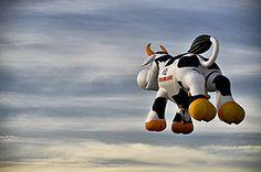 ¿No que no hay vacas voladoras?