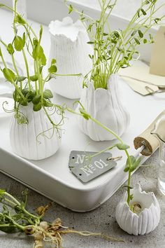 Pour créer votre petit potager, misez sur le DIY ! Glass Vase, Garden, Crafts, Pottery Ideas, Pots, Craft Ideas, Instagram, Plant Cuttings, Plants