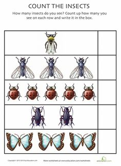 Ladybugs and butterflies and moths, oh my! Give your little learner an introduction to creepy crawlers with these bug counting worksheets.