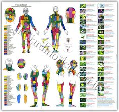 Fiori di Bach - Mappa Topografica delle Zone Cutanee Secondo Kramer - Bach Flowers, Body Chart, Body Map, Foot Massage, Holistic Healing, Slovenia, Astrology, Remedies, Health