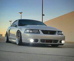 2003/2004 SVT Mustang Cobra Terminator Mustang Cobra, Ford Mustang Gt500, 2004 Ford Mustang, Fox Body Mustang, Ford Mustang Shelby, Mustang Horses, Ford Mustangs, New Edge Mustang, Mustang Emblem