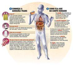 Gorduras Trans: como evitar…