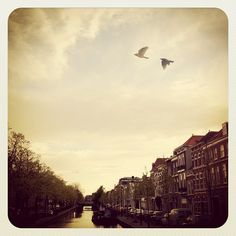 The pretty The Hague canals, and some lover birds flying over it. #pinyourcity #thehague