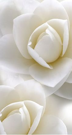 Avon fragrance find the right note for you. Try Rare Pearls. It Reminds me of a day in May.  A sweet promise of good days to come. Sharlet Martin