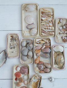 Seashell collection.  Spray painted Altoid tins?