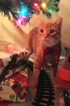 If you stand there like a big orange mountain tunnel long enough, the train under the Christmas tree eventually will return and you can catch it. Or at least, this appears to be the plan of this watchful cat waiting for his kitty toy to show up under the colorful Christmas tree lights over the presents. -DdO:) http://www.pinterest.com/DianaDeeOsborne/christmas-keys/