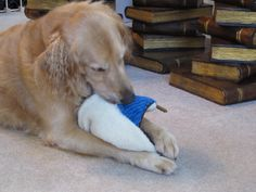 Petlinks Scents of Security toy http://www.allthingsdogblog.com/2013/09/scents-of-security-toy-rehoming-begins.html