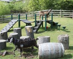 Goat Pen, this playground for goats let them climb and play! Makes you wonder what other ideas a person can come up with as goat toys! Keeping Goats, Raising Goats, Mini Goats, Baby Goats, Goat Playground, Playground Ideas, Miniature Goats, Miniature Cattle, Goat Shed