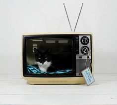 Upcycled television set pet bed.  Haha! excellent!