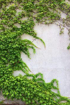Green, nature, wall