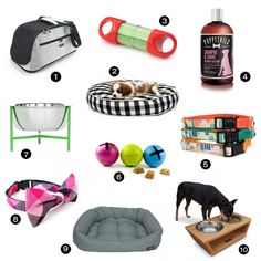 Modern Dog Accessories from PetFancy - Dog Milk