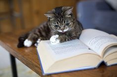 Lil Bub reads books.