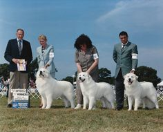 Darlington Great Pyrenees.com THE LEGACY LIVES ON