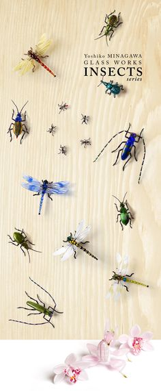 INSECTS series 昆虫シリーズ