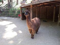 Rancho Las Lomas Wildlife Foundation.