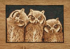 African Scops Owl Trio Drawing by Cate McCauley