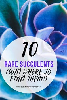 We've gathered a list of some rare succulents and where to find them. Obtaining some of these hard-to-find succulents and cacti is a good start, but some are hard to care for! To know more about these rare succulents, check out this pin! Flowering Succulents, Cacti And Succulents, Planting Succulents, Cactus Plants, Planting Flowers, Succulent Images, Succulent Planter Diy, Succulent Care, The More You Know
