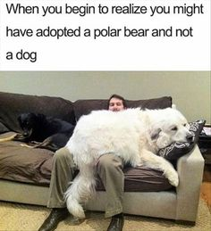 Check out the latest collection of 54 random memes photos that make you so hilarious of the day to make you more entertaining and lol. Funny reactions of the people provide a way to create the funniest memes. Cute Animal Memes, Animal Jokes, Cute Funny Animals, Cute Baby Animals, Hilarious Animal Memes, Cute Dog Memes, Dog Jokes, Animals Dog, Funny Babies