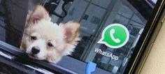 A Justiça do Rio de Janeiro determinou o bloqueio do WhatsApp em todo o Brasil; veja reportagem da GloboNews no vídeo acima. Uma notificação foi enviada para as empresas de telefonia após o Facebook se recusar a cumprir uma decisão ...
