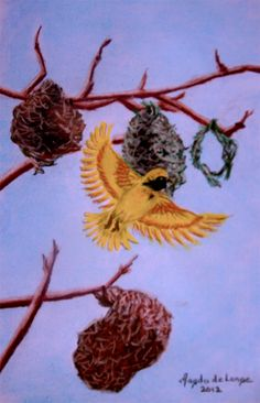 "©2012, Magda de Lange, ""Southern Masked Weaver"", Pastel on Paper, 38.5x28.5 cm Available at http://www.magdasart.com"