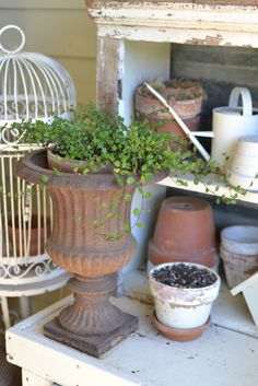 Faded Charm: possibility as a repurpose of one of the small set of drawers - repurpose as a gardening shelf out back