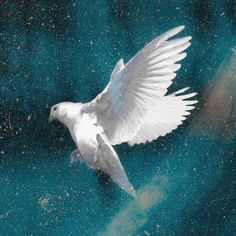 Let's take a look at who the Holy Spirit is and how to identify Him in our lives. Prophet Isaiah, Love The Lord, Gods Love, Le Pedi A Dios, Bible Topics, Names Of Jesus Christ, God Jesus, Jesus Christus, Christ