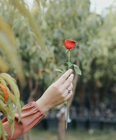 Dpz for girls Hand Photography, Fashion Photography Poses, Autumn Photography, Beautiful Hijab, Beautiful Hands, Beautiful Flowers, Hand Pictures, Girly Pictures, Hand Pics