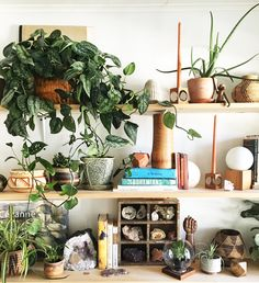 shelf styling with l