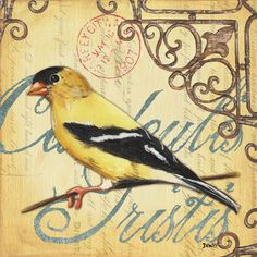 Pretty Bird 3 Painting  - Pretty Bird 3 Fine Art Print