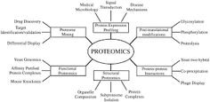 Proteomics is a systematic study of proteins on a large scale, particularly their functions and structures. Proteomics has the potential to answer some key questions that were unsolved by genomics, because proteins are the functional unit of cells. Proteomics research is enhanced by both protein and DNA sequence databases, advances in mass spectrometry, and development of computer algorithms for database searching.