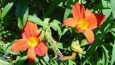 Linguaggio dei fiori, Significato dei fiori
