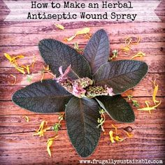 herbal antiseptic wound spray Natural Health Remedies, Natural Cures, Natural Healing, Herbal Remedies, Holistic Remedies, Healing Herbs, Holistic Healing, Medicinal Plants, Natural Medicine