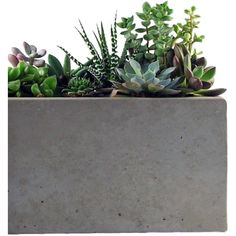 Roughfusion Rectangular Concrete Planter (90 CAD) ❤ liked on Polyvore featuring plants