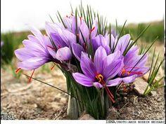 http://iran.mycityportal.net - birjand news - #iran