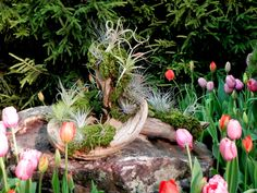 Gone Walkabout 2: Nashville Lawn and Garden Show 2015
