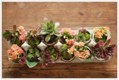 eggshells in bloom - succulent planters