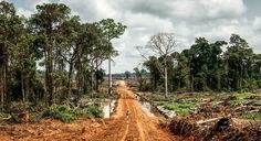Africa's Vanishing Forests | OnEarth Magazine.   Africa's Vanishing Forests  That palm oil listed in the ingredients of your favorite candy bar or lipstick? More and more of it comes from forest and farmland razed by multinational corporations a world away.