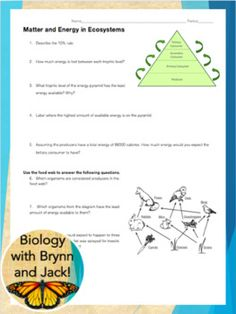 Ecology Coloring sheet , Food Web Energy Pyramid, Food