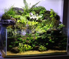 20 gallon rimless mish mash...paludarium? - Page 2 - The Planted Tank Forum