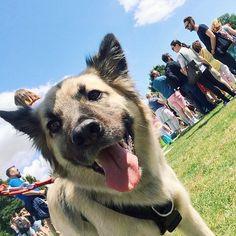 I'm at Brighton Pride Dog Show... Pretty pleased with myself #declandog  #brightonpride #dogshow #brighton