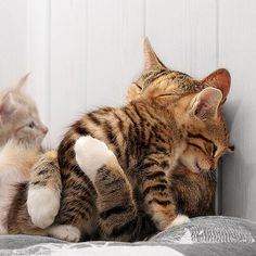 So sweet... i want a striped kitty next!