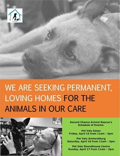 Events, Animal Adoption - Second Chance Animal Rescue - Windsor, On