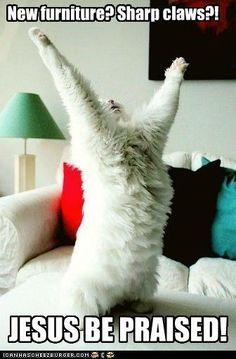 """Reminds me of my cat... cant get enough of """"kneading"""" EVERYTHING!!"""